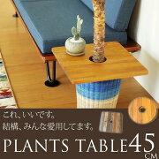 テーブル マンゴー プラント