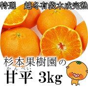 杉本果樹園特選越冬有袋木成完熟甘平約3kg箱