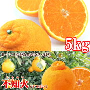 【愛媛県産】(株)オレンジフーズ不知火(でこぽん)4.5kgご家庭用【日時指定不可】
