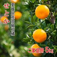 リベラル愛媛県産高級柑橘せとかL〜4Lサイズご家庭用5kg
