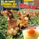 卵 たまご 産地直送 放し飼い卵 初卵 180個入 生食用卵 九州産福岡県産 自然卵……