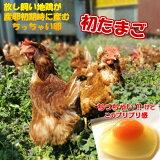 放し飼い卵 180個 初卵 Sサイズ 小玉 生食用卵 産地直送 九州産福岡県産 自然卵 送料無料 お中元 お歳暮 破損補償