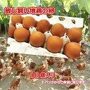 鶏卵 放し飼い卵 自然卵 10個 お試し用 かぐやひめ卵 贈答用卵 たまご 産地直……