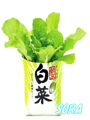 季節限定の白菜が登場!!自産自消 鍋友白菜 12個セット