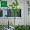 花水木 桃 単木 樹高 H:2000mm 植木 苗