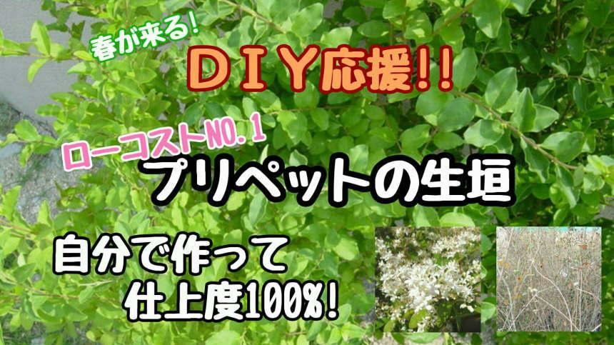 姥目樫 H900〜1100 30本 :gi1106...