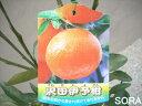 5本以上で送料無料!! 【イヨカン】風味と甘味も抜群でとても美味しい!いよかん・沢田伊予柑 2年生