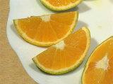 国産バレンシアオレンジ5kg【ご家庭用】【送料無料】