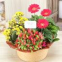 誕生日 花 鉢植え 3種の花で作る季節の花かご【ハピネス】 ...