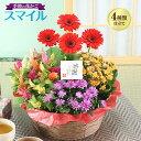 誕生日 ギフト 花 プレゼント 鉢植え 花 寄せ鉢 4種の花で作る季節の花かご