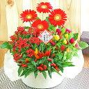 誕生日 鉢植え 花 寄せ鉢 4種の花で作る季節の花かご 敬老...