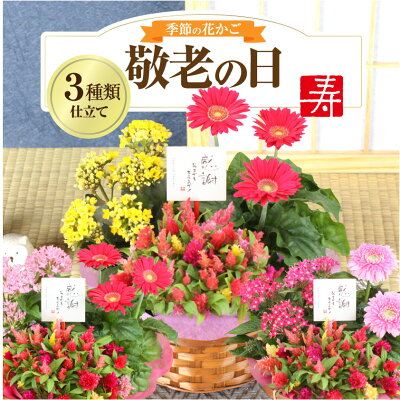 敬老の日ギフト 花 【花かご】3種の花で作る季節の花かごギフト誕生日 プレゼント