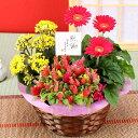 誕生日 ギフト 花【花かご】3種の花で作る季節の花かごギフト...