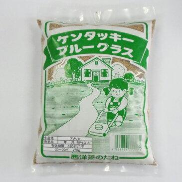 【クーポン配布中】西洋芝の種(ケンタッキーブルーグラス) 250g入り(20〜30平方メートル用)