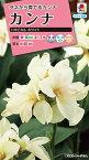 【クーポン配布中】タキイ種苗 花種 カンナ トロピカル ホワイト メール便対応 (B06-030)