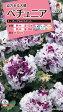 【メール便対応】【タキイ種苗】【花種】ペチュニア F1 パープルピルエット(FPT226)