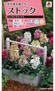 【クーポン配布中】タキイ種苗 花種 ストック シンデレラミックス メール便対応 (B04-020)