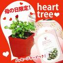 ハートツリー 母の日 限定版 花 ギフト プレゼント におすすめ TVや雑誌で話題! 赤いハート の実 がなる木 【ミニ植物】【鉢植え】通…