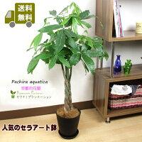 観葉植物パキラ7号セラアート黒鉢正面