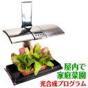 屋内で家庭菜園できる水耕栽培キット【キッチンガーデン/Kitchen Garden】