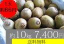 美容と健康にビタミンC豊富なキウイフルーツをどうぞ!!神奈川県産特別栽培キウイ【10kg/7,400円】【送料無料】【1玉約66円】【家庭応援】【tokai0304送料無料】
