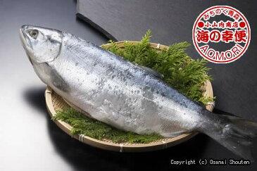 北洋紅鮭 1本約2.9kg前後