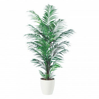 花・観葉植物, 観葉植物  TOKA 98548