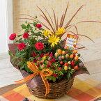 寄せ鉢「秋のカラフル・パレット」