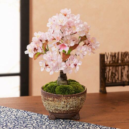 盆栽「風流桜」