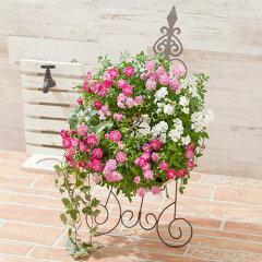 玄関に飾りたい、とびきりキュートなミニバラのリース寄せ植え「ミニバラリース」