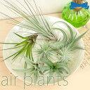 普段植物の育てにくい環境(暗い玄関やトイレなど)でも、飾れます。【定型外郵便送料5個まで25...