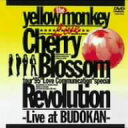 CHERRY BLOSSOM / YELLOW MONKEY