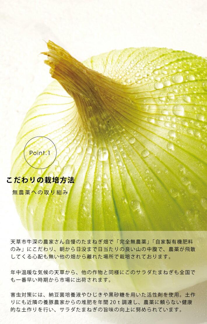 玉ねぎ 5kg 完全無農薬 こだわり農法 サラダたまねぎ5kg オーガニック栽培 サラたま M~Lサイズ混合