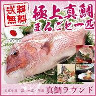 真鯛ラウンド約1kg