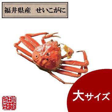 福井県産ゆでせいこがに 大サイズ