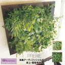 PRERIE 消臭アーティフィシャルグリーン 壁掛用 L /人工観葉植物 フェイクグリーン 造花 お