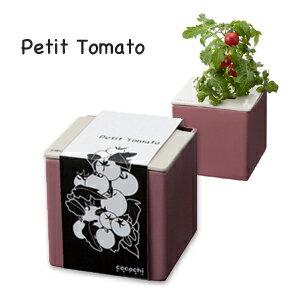 土を使わず水と肥料で野菜を育てる!あまり背が高くならず育てやすいプチトマト(レジナ)心知...