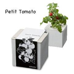 心知菜園(cocochi saien)プチトマト(ホワイト)種・肥料付き!おしゃれに育てるプチ…