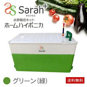 【送料無料】水耕栽培キット・ホームハイポニカSarah+(サラプラス)グリーン(緑)ベランダで…