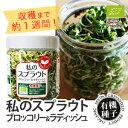 私のスプラウト(ブロッコリー&ラディッシュ)栽培セットジャーで育てる新食感スプラウト!有機種子で安心!有機栽培(オーガニック)ブロ…