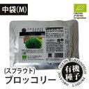 【種】有機種子 ブロッコリー<スプラウト> 中袋 M(64g/1dl)抗ガン作用が期待されるスーパースプラウト!まとめ買いやリピーターさん…