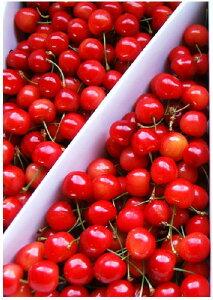 Mサイズの小粒ですが、甘さと酸味のバランスが良い自家用として最適です。坂部農園取り扱い商品...