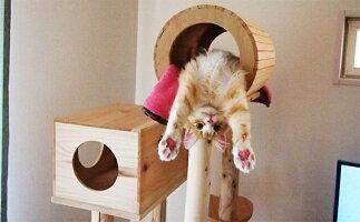宮大工さん手作り、木製キャットタワー『猫まみれツリーハウス』