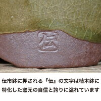 【おしゃれ植木鉢2.5号】伝市鉢丸型/市野伝市窯