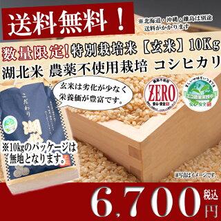 お米/湖北米農薬不使用米コシヒカリZERO【玄米】10kg特別栽培米【送料無料(一部除く)】
