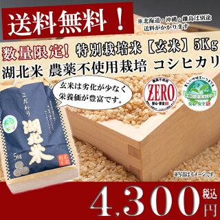 お米/湖北米農薬不使用米コシヒカリZERO【玄米】5kg特別栽培米【送料無料(一部除く)】