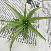 【あす楽対応】お手入れ簡単なエアープランツ* チランジア ブラキカウロス EP-007 *お部屋にグリーンを【エアプランツ ティランジア かわいい おしゃれ かっこいい 観葉植物 インテリアグリーン 植物 室内 インテリアプランツ ハンギング ガラス 吊るす】