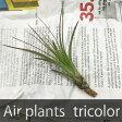 【あす楽対応】 お手入れ簡単なエアープランツ * チランジアトリコロール メラノクラテル EP-005 *お部屋にグリーンを【エアプランツ ティランジア かわいい おしゃれ かっこいい 観葉植物 インテリアグリーン 植物 室内 インテリアプランツ ハンギング ガラス 吊るす】