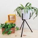 パワーレッグスタンド255 GD-1674 アイアンスタンド おしゃれ ガーデニング 観葉植物 棚 雑貨 鉢 鉢置き 鉢台 プランタースタンド 室内 ラック サンカ