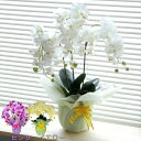 光触媒 胡蝶蘭 観葉植物 フラワー 花 造花 光の力で脱臭・殺菌!アレンジメント アートフラワー